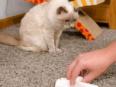 Как почистить диван от мочи народными средствами